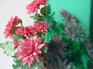 Photo of a translucent green decorative film